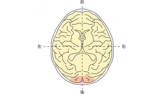 脳損傷の部位と症状